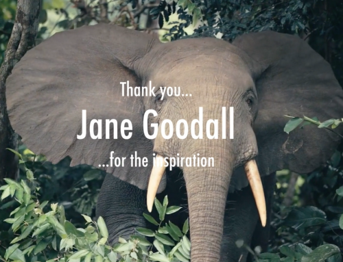Mother Earth by Jane Goodall